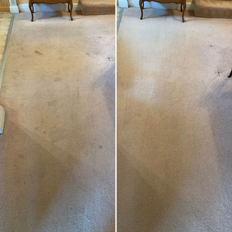 Rocky's Carpet Cleaning | Carpet